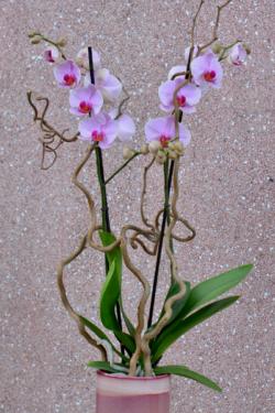 Orchidée Rose 2 Branches