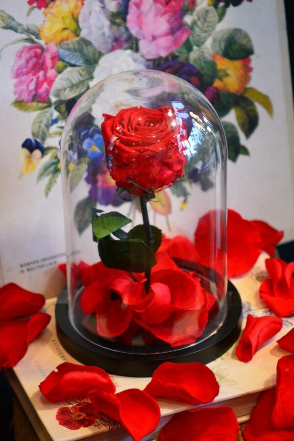 Rose naturalisée avec tige